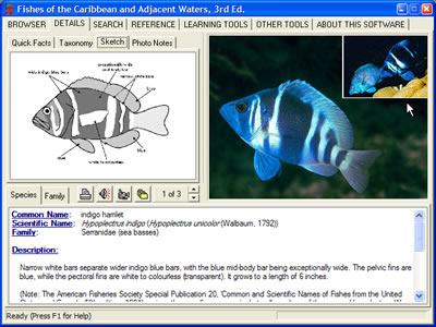 reefnet inc reef fish identification interactive edition